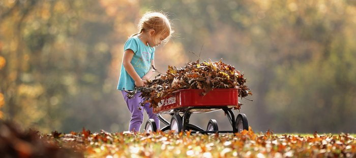 Child with a wagon full of leaves