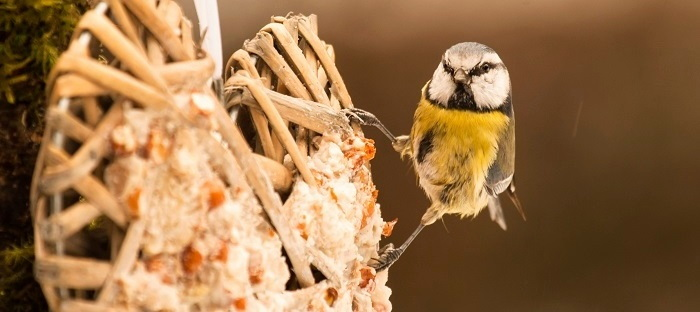 Little gray and yellow bird