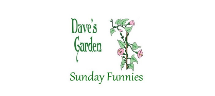 Sunday Funnies logo with vine and flowers