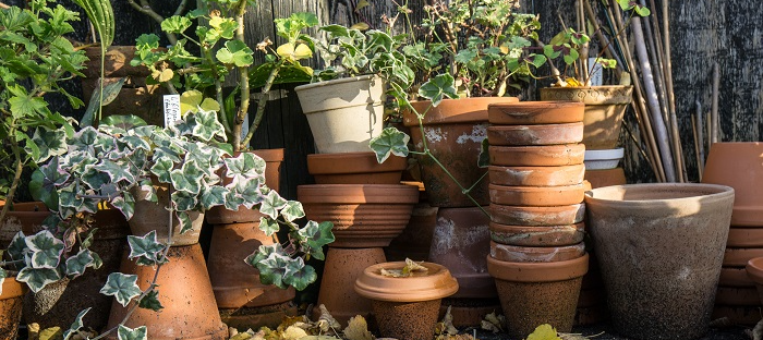 Time To Get Your Pots Ready For The Growing Season!