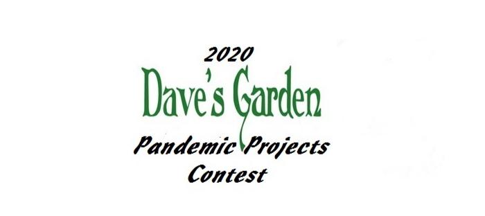 2020 DG Pandemic Projects contest logo