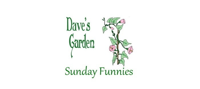 Sunday Funnies vine and logo