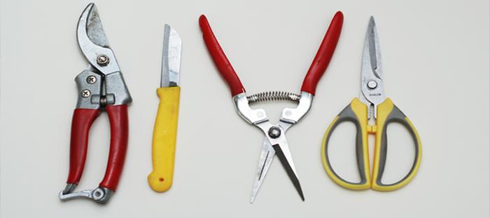 Types of Floral Scissors