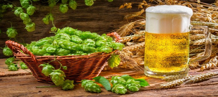 green hops in basket with mug of beer