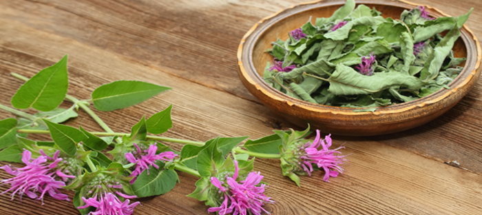 Dried bergamot leaves and flowers in wooden bowl
