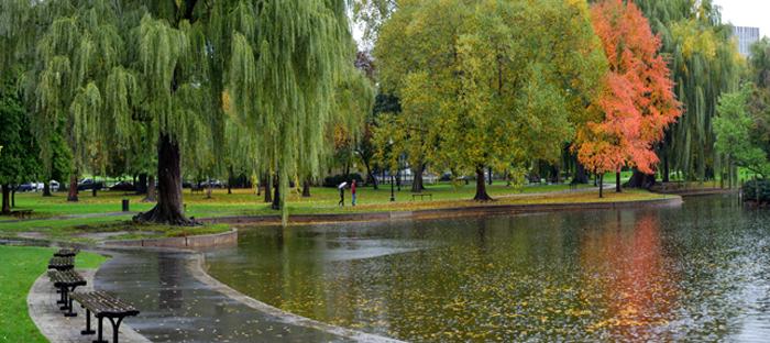 Pond After Rain