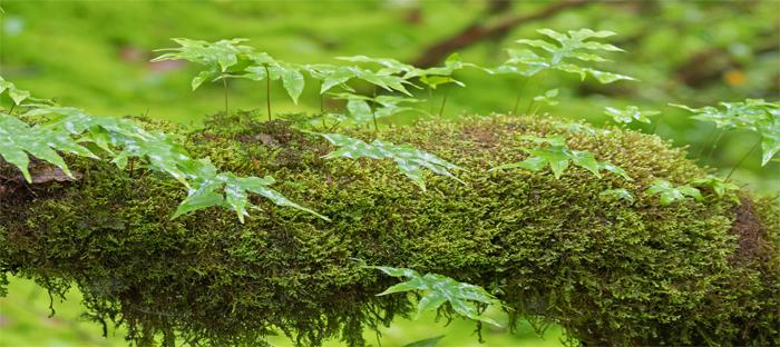 Peat Moss Growing on a Log