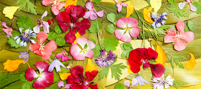 Colorful Pressed Flower Petals