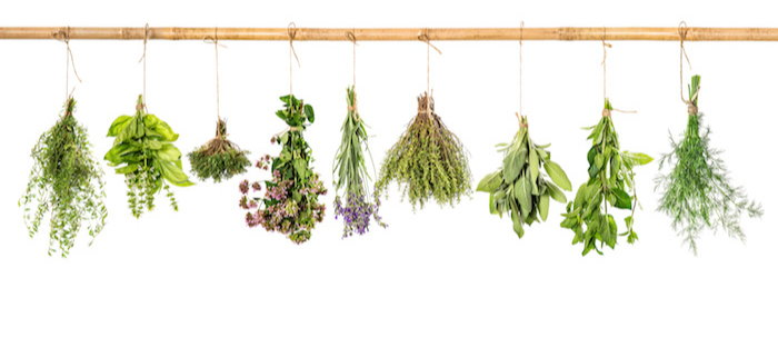 various herbs hanging to dry