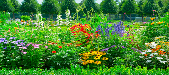 colorful perennial bed