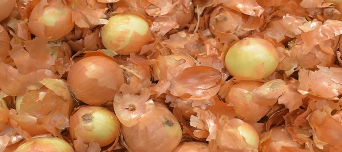 Yellow Onion Skins