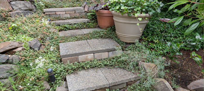 Stone Paver Steps surrounded by pots and groundcover