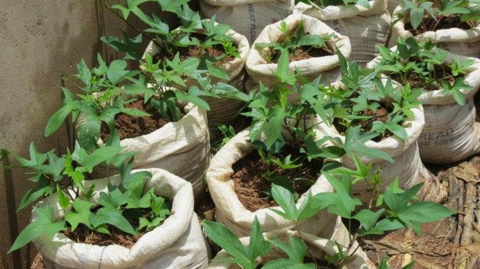 cloth grow bags