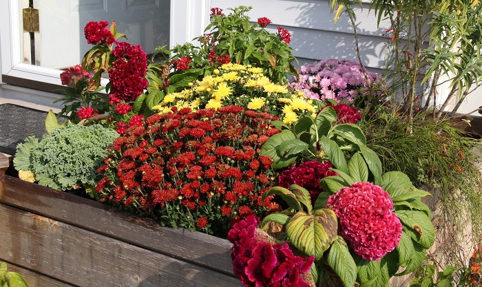raised planter with colorful plants