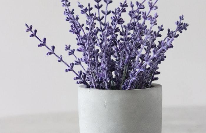 cut lavender flowers in a vase