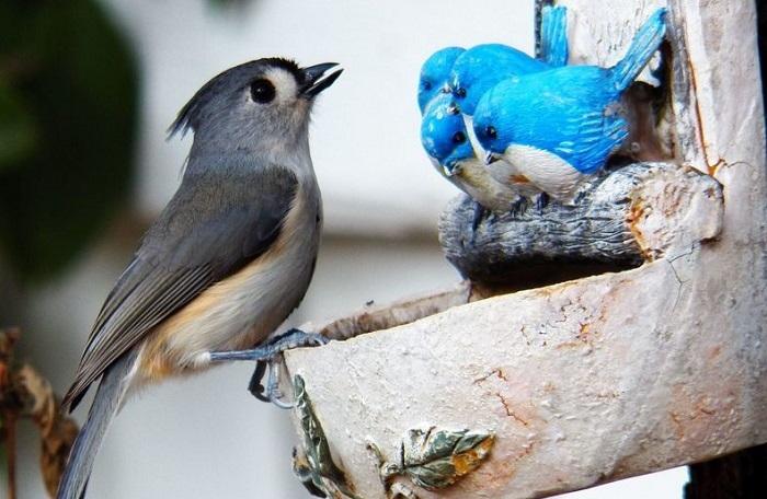 live bird looking at sculptures of birds