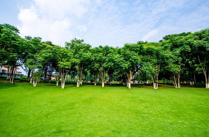 trees in an urban landscape