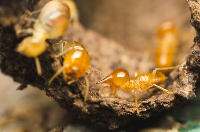 Close up of termites eating tree bark