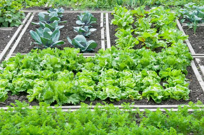 plant rows garden