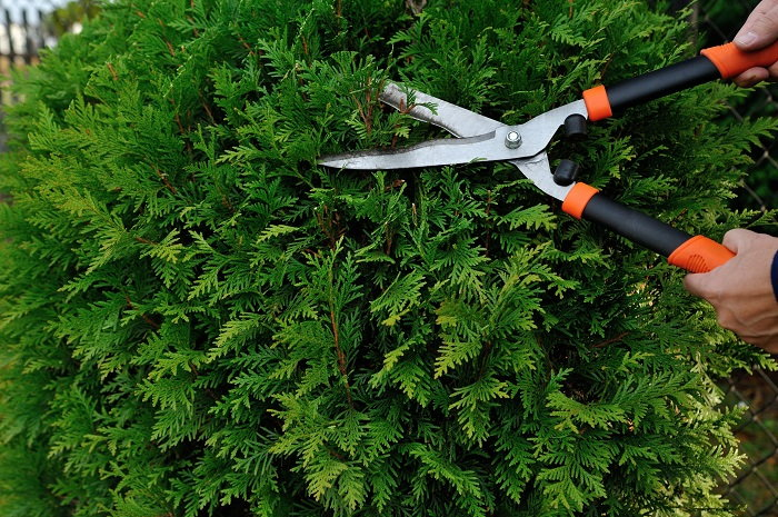 prune your trees and shrubs to keep rodents away from your yard