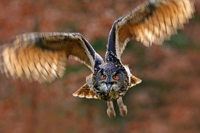 Owls in the Garden - Dave's Garden
