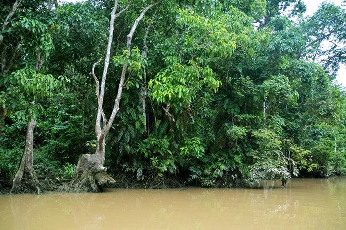 mangroves growing in the water
