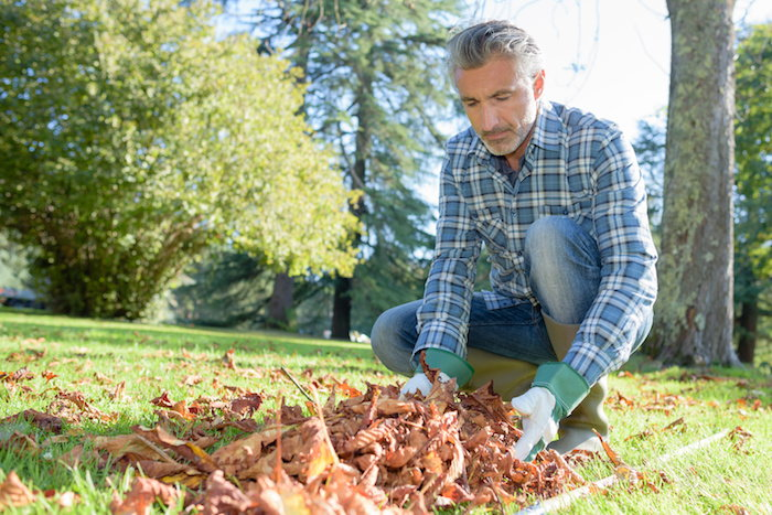 remove dead organic material from your lawn to keep puffballs at bay