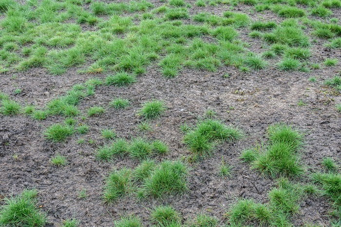 damaged lawn