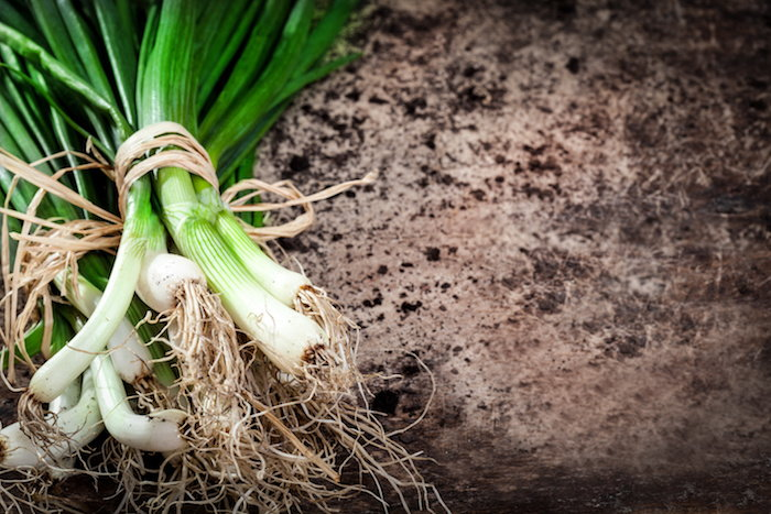 Green onion sprouts in the soil