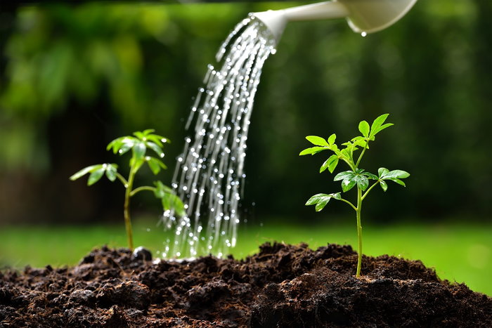 Watering young plants