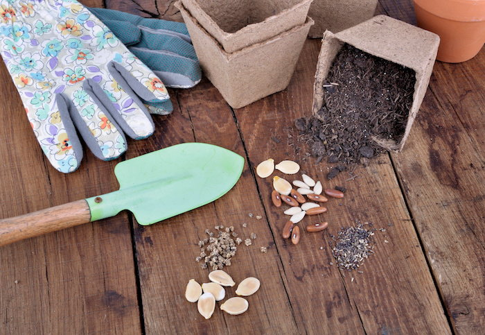 seed starting in biodegradable containers