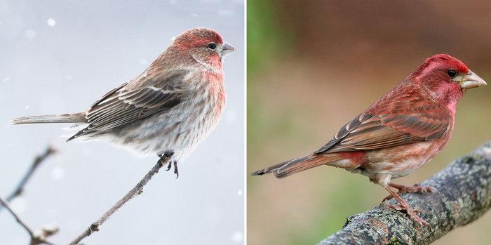 Winter Birds Of The Ozarks - Daves Garden-3644