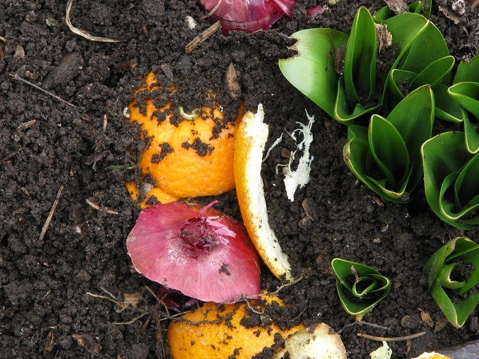 organic compost in the soil