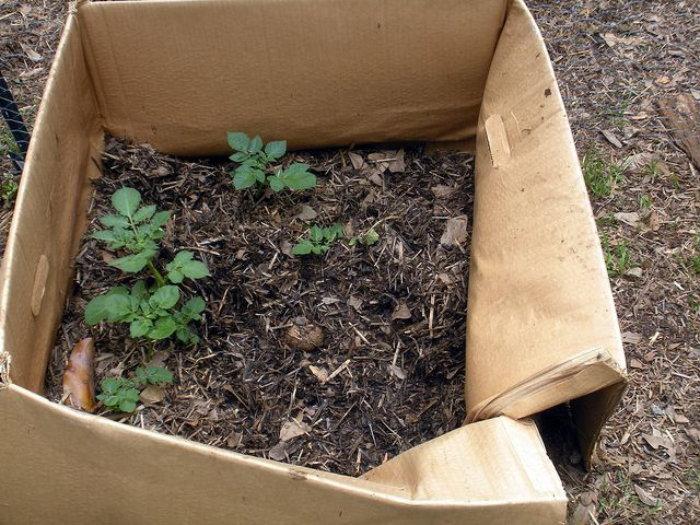 cardboard box planter