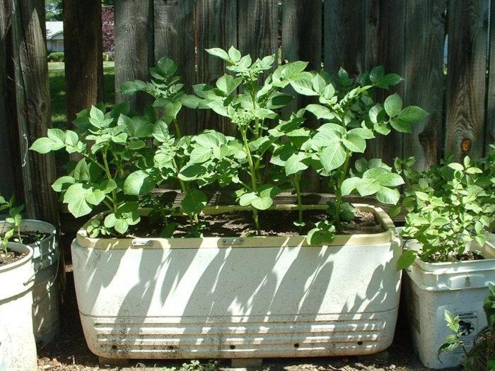 ice chest planter