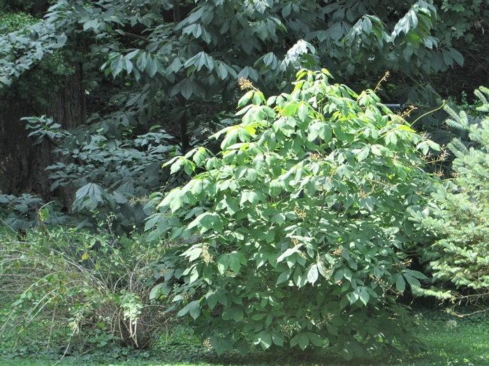 green shrubs