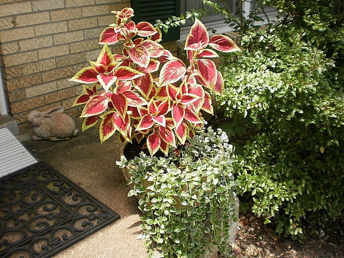 multicolored container of plants