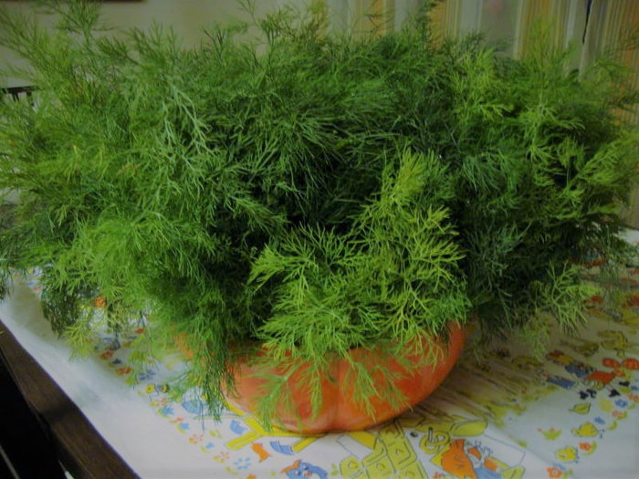 Dill leaves in a red bowl