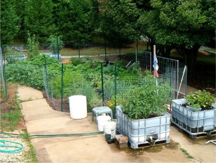 IBC containers in a garden