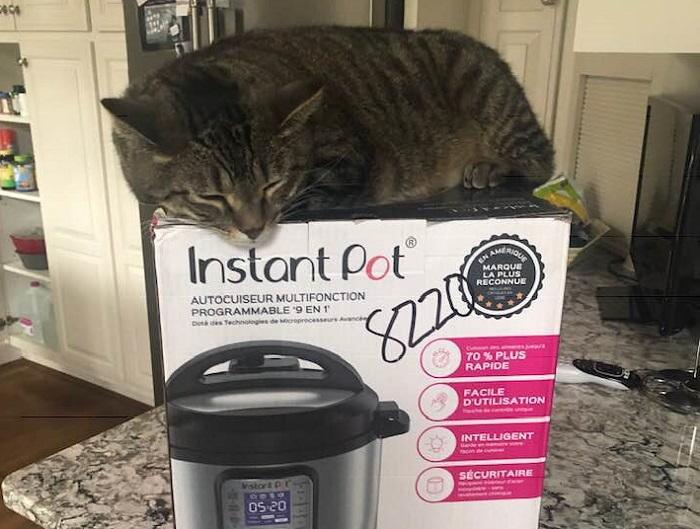 cat on instant pot box