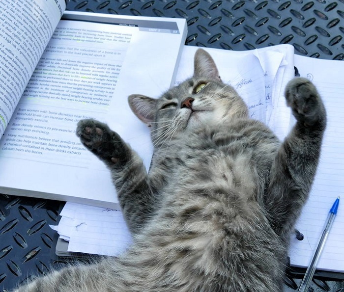 cat laying on book