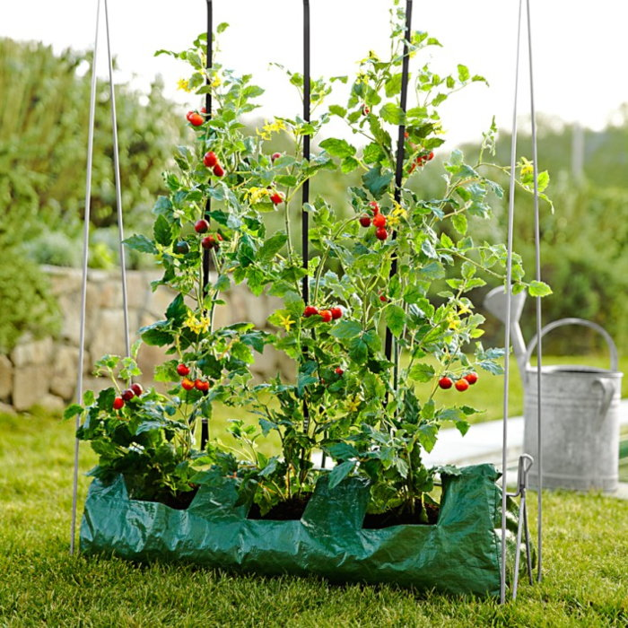 tomatoes in large grow bag