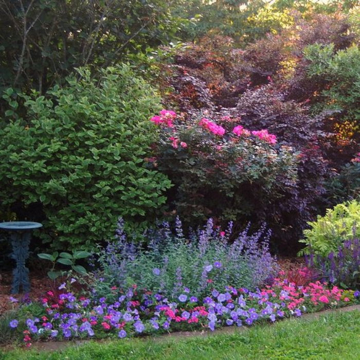 beautiful pink and blue flower border