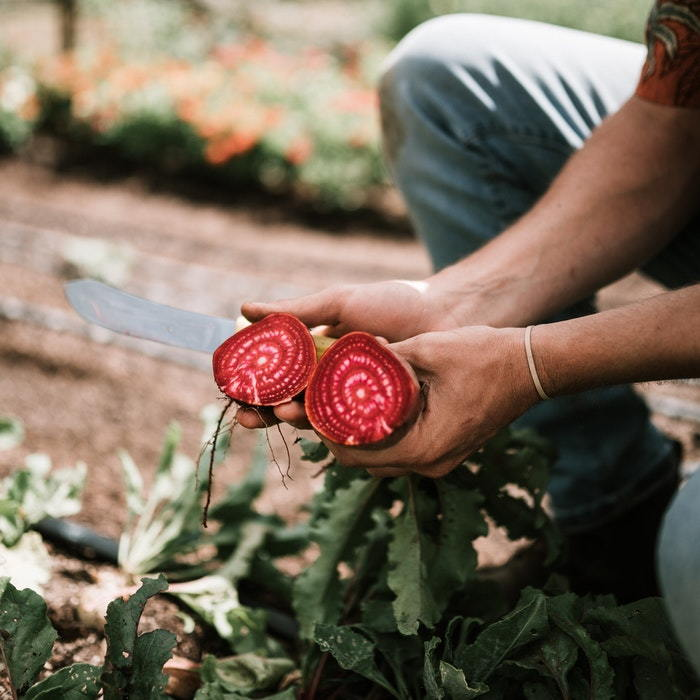 person holding beet roots