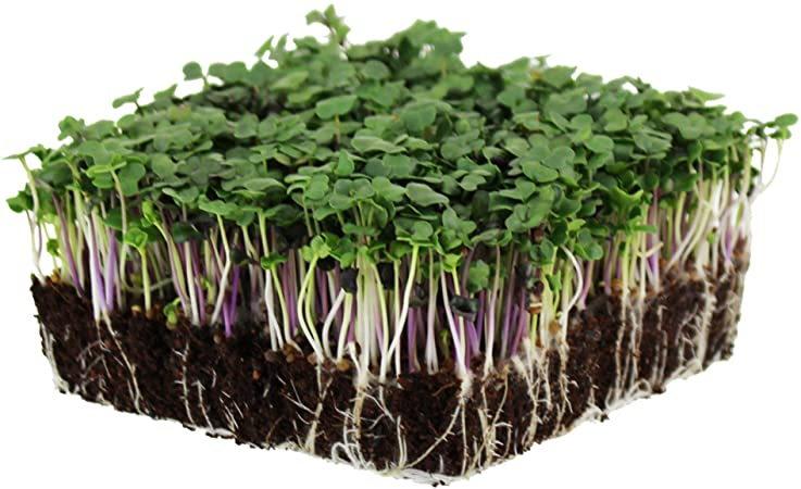 block of microgreens