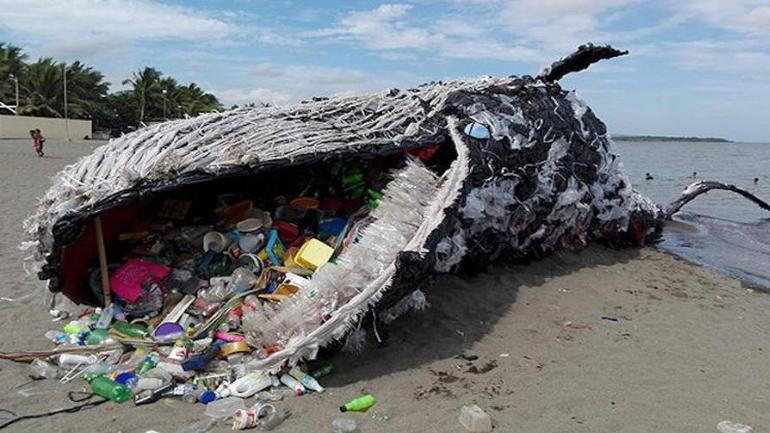 dead whale that has swallowed plastic garbage