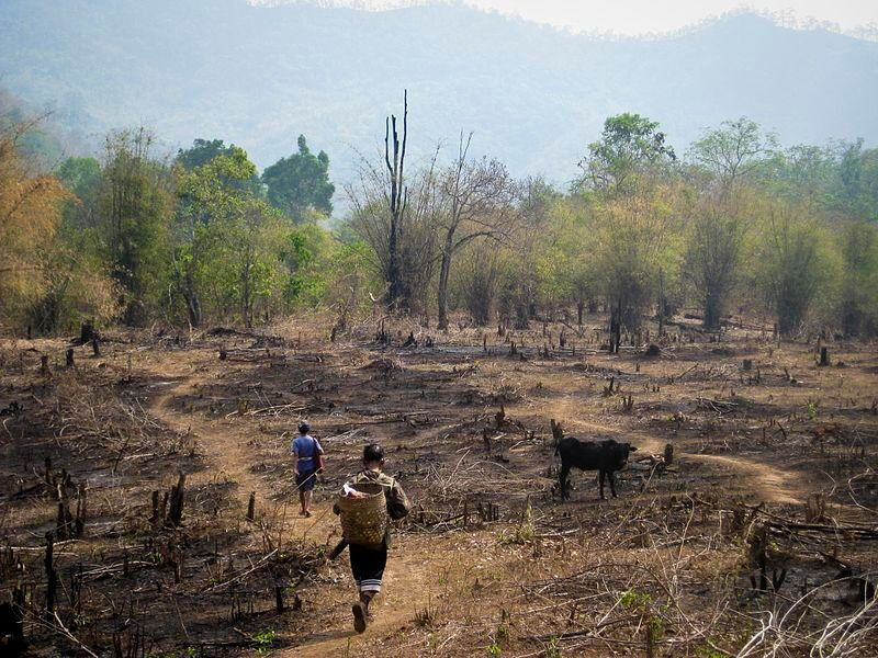 people replanting burned forest