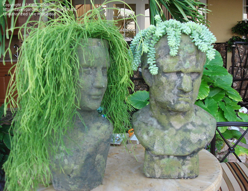 succulents in stone heads