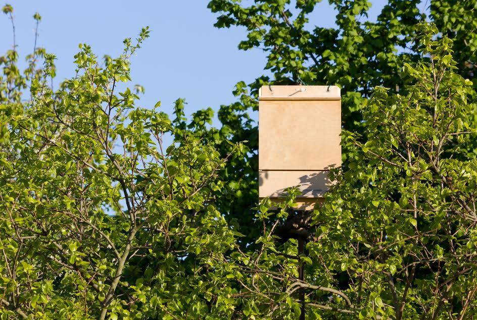 bat box mounted in a tree