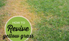 """A patch of dead grass with the words """"How to revive yellow grass."""""""